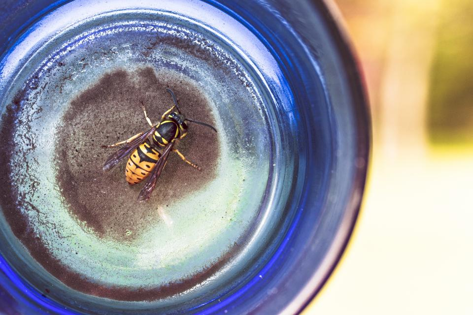 How BP Reformulated Learning to Work Like Honey Bees